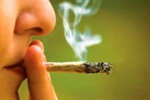 Consumo de cannabis por los jóvenes