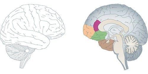 Causas del TOC - Anomalías cerebrales
