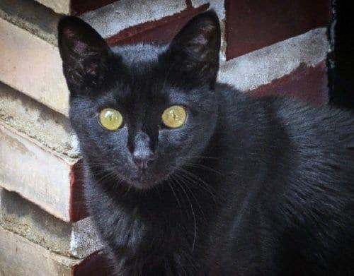 Ailurofobia o Fobia a los gatos