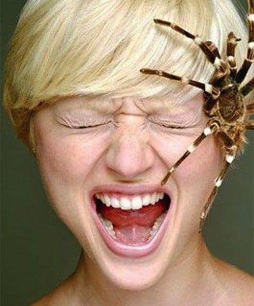 La aracnofobia es una de las fobias más frecuentes