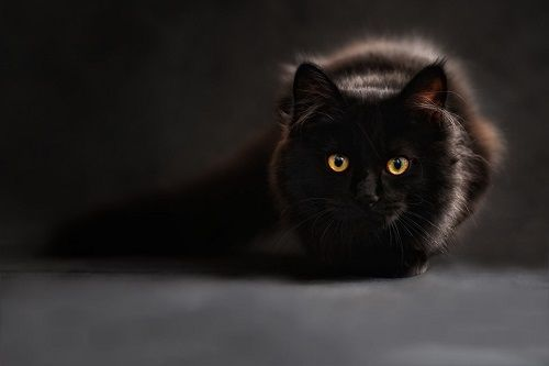 Supersticiones - Cruzarse con un gato negro