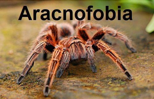 Fobias infantiles. Miedo a las arañas o aracnofobia.