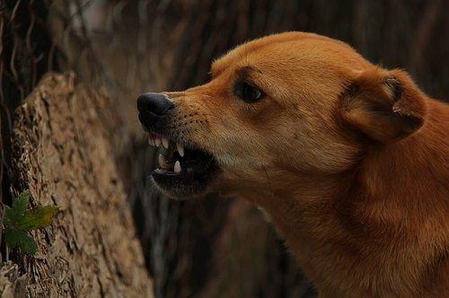 El miedo a los perros es otra de las fobias infantiles más frecuentes.
