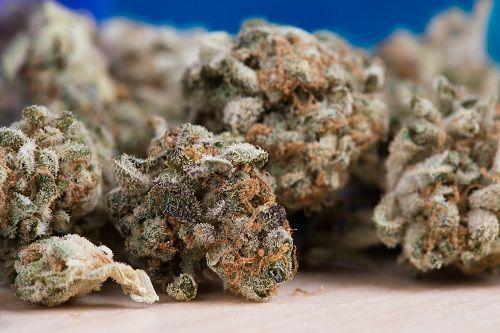 El Cannabis es la droga ilegal más consumida por adolescentes