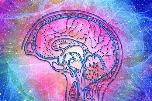 El cerebro de la persona altamente sensible