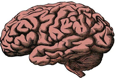 La implicación del cerebro en la toma de decisiones.
